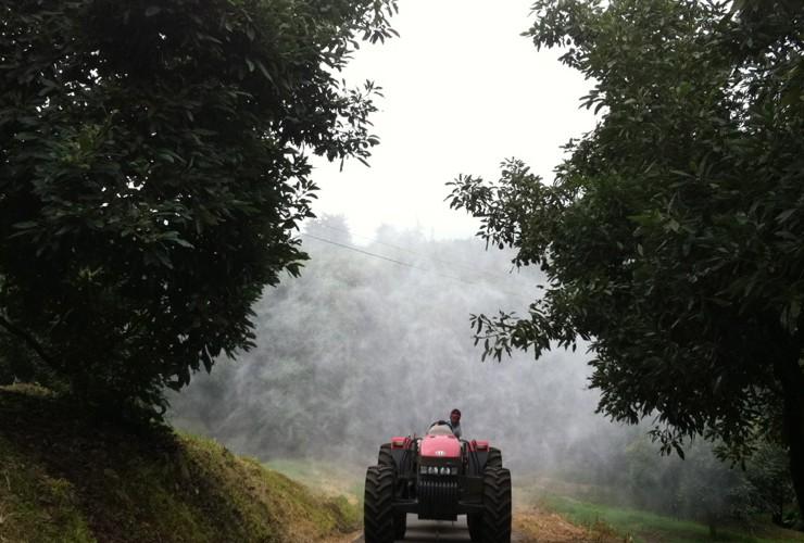 Sprayer-Fruit trees-0-Uruapan / Fp 550lt 1000 - Lt 1500 - Lt 2000