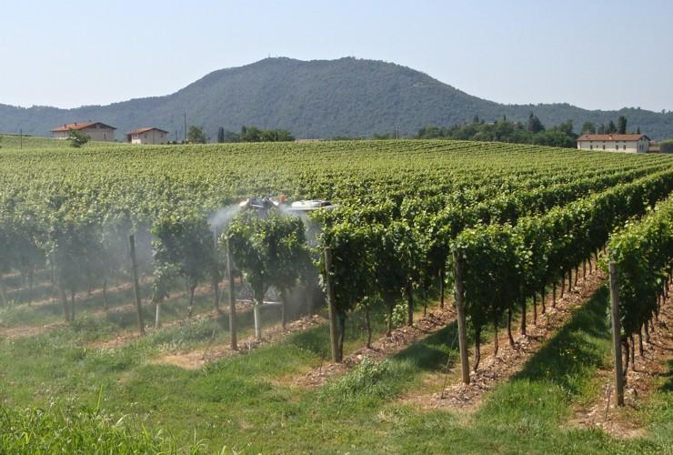 Sprayer-Espalier vineyards-Two-wire-Fast 55 Lt 400 –  Lt 600